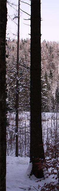 Winterlandschaft wie im Bilderbuch